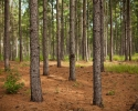 gallery_forest