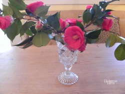 Camellias in the kitchen